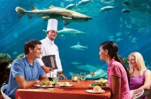 Lunch with Sharks , Underwater Grill at Sea World