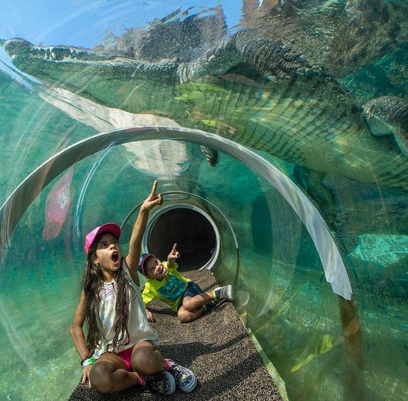 From inside of an underwater tunnel, watch a crocodile swim at Zoo Miami